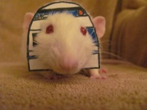 Dress your rat up as R2D2